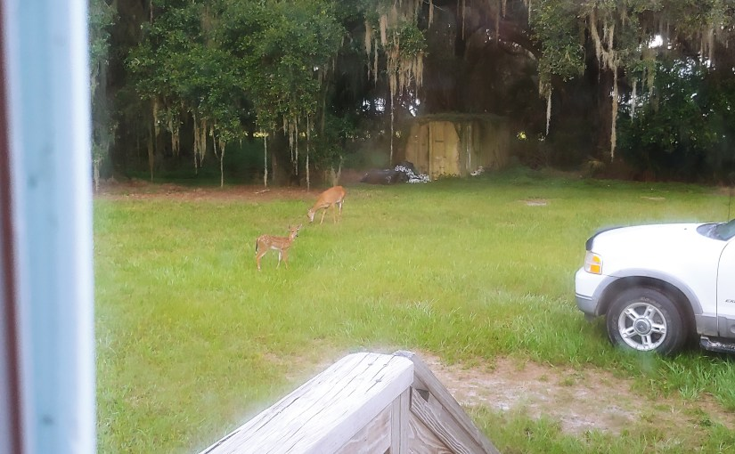 You Can Challenge Yourself But You Can't Always Make The Body Perform/ Day 8/The Deer Came