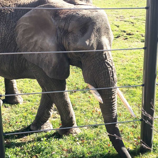 Life Is Sweet October 2019 - Up close with Ruth the elephant at MKE County Zoo.