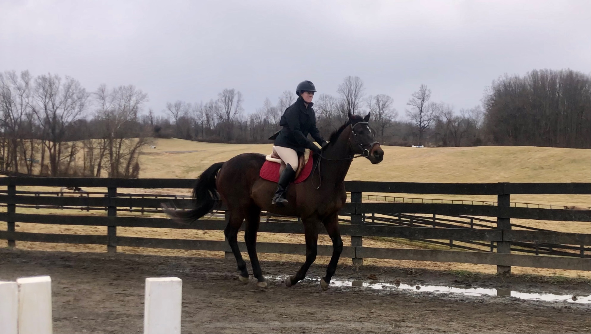 Rider cantering on a horse.