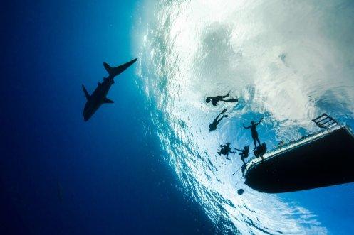 Shark dive 11- Juan Oliphant OneOceanDiving.com