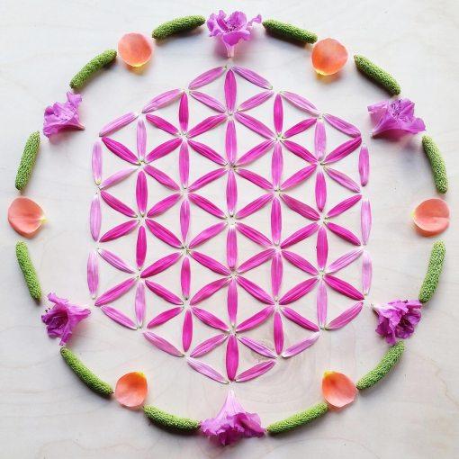 Purple hexagon in circle