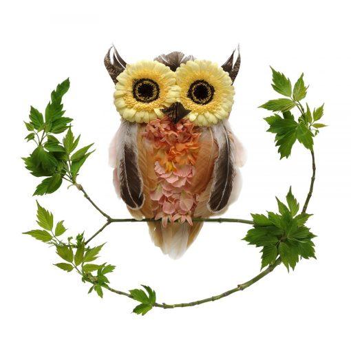 Sacred Owl