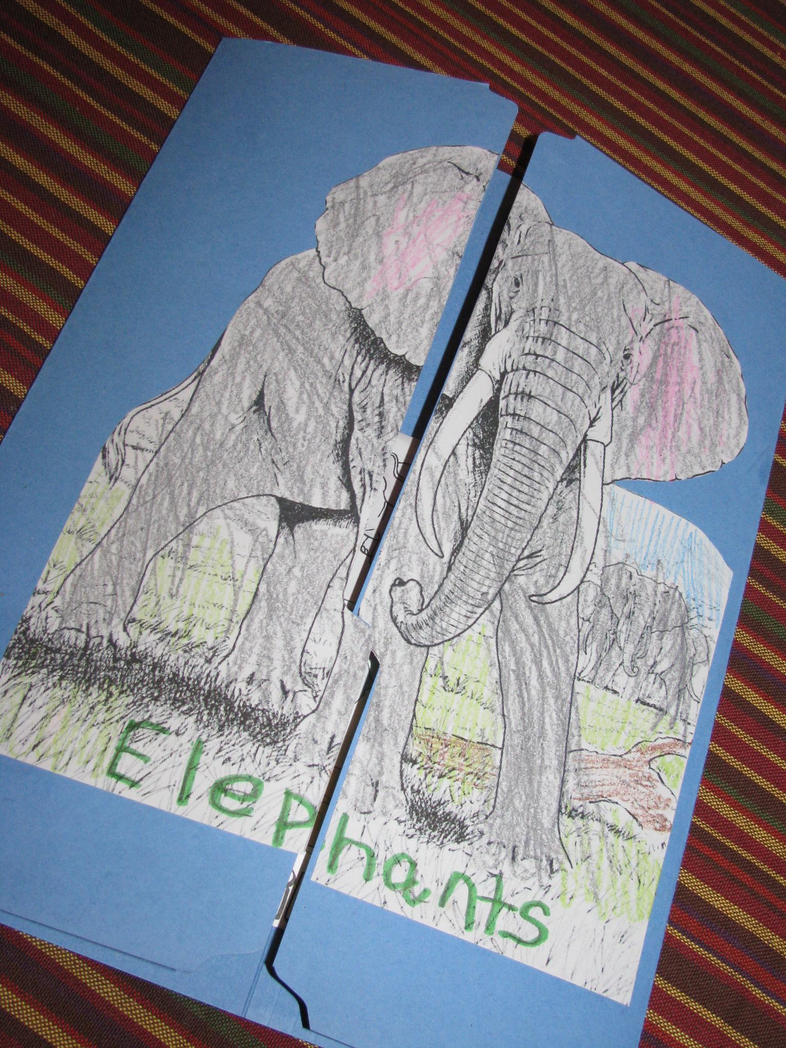 Animal Report Make A Lap Book In A File Folder Inside