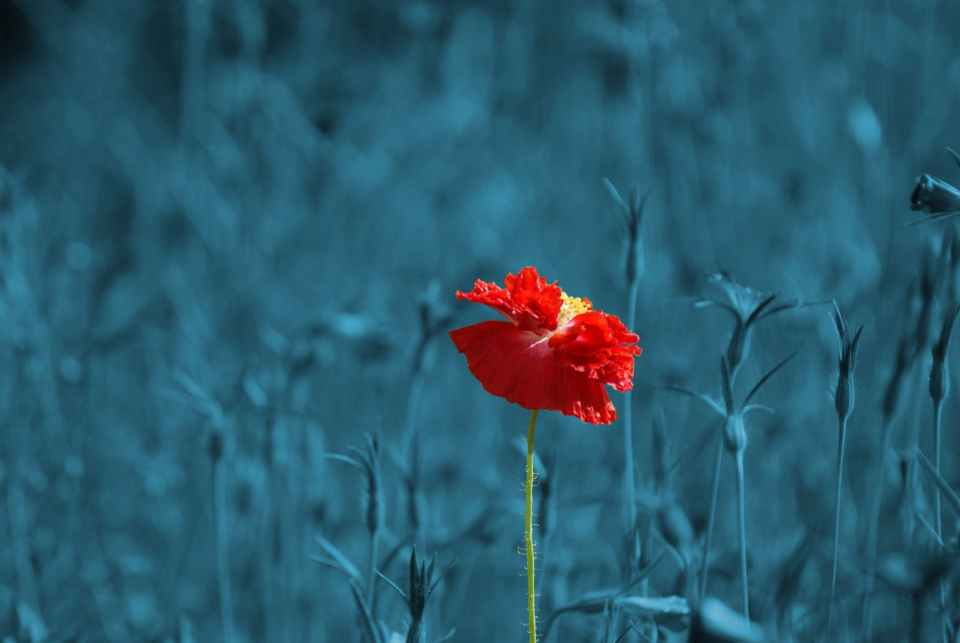 nature red art blue