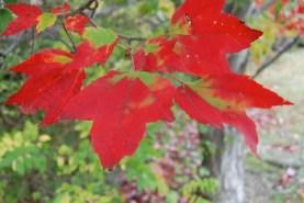 fall is beautiful