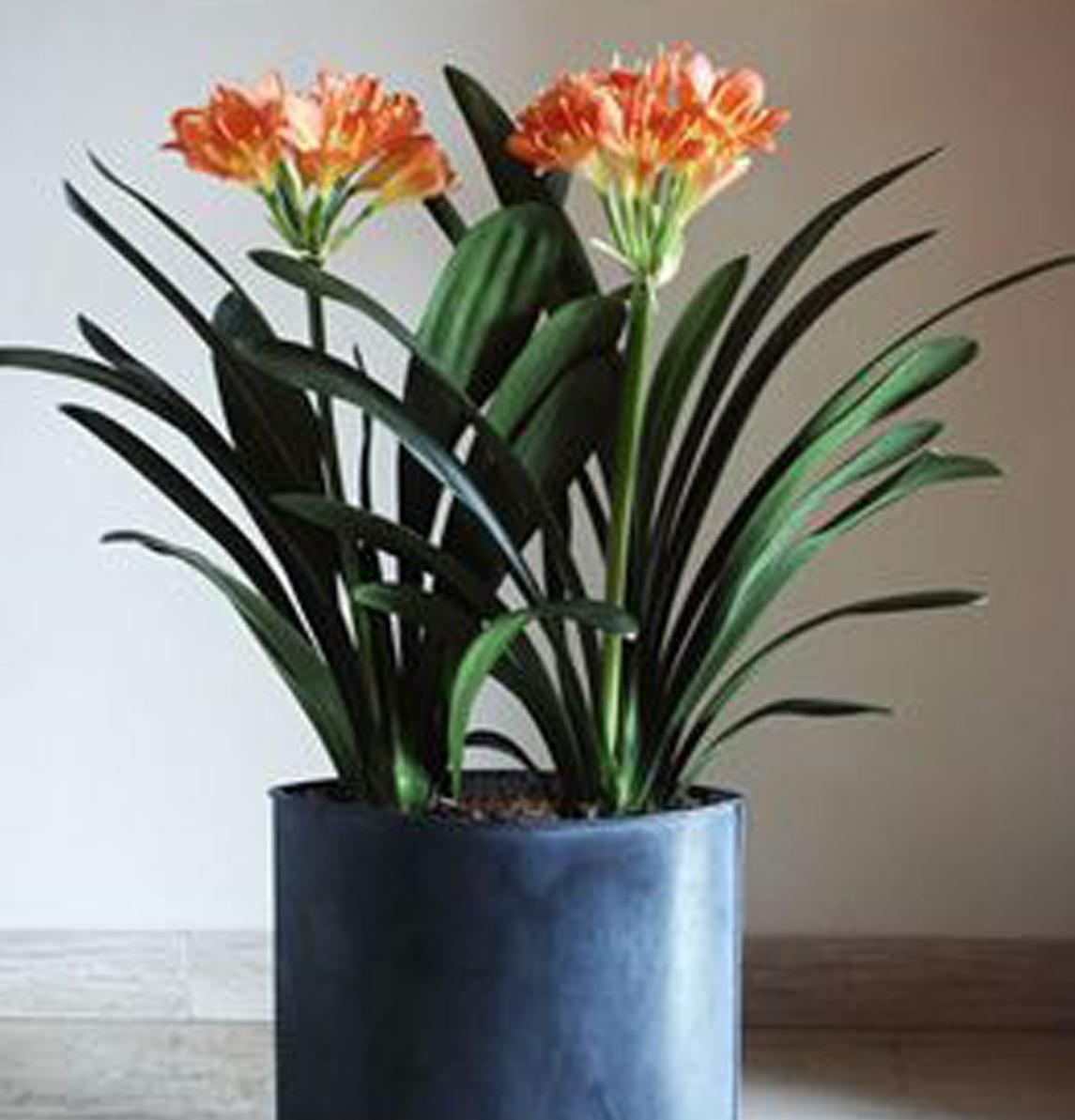 Flores y Plantas  Sarai Floristeras