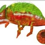Il mio logo: il camaleonte