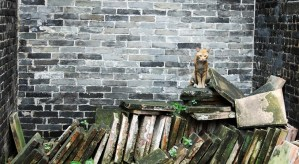 Cat in the Julong Village