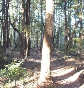 Types of trails: single track