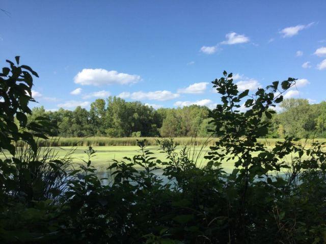 Bredesen Park