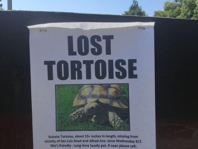Lost Tortoise