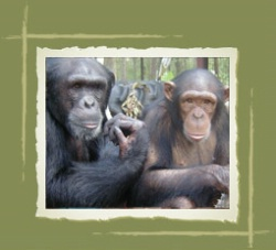 Image: Center for Great Apes