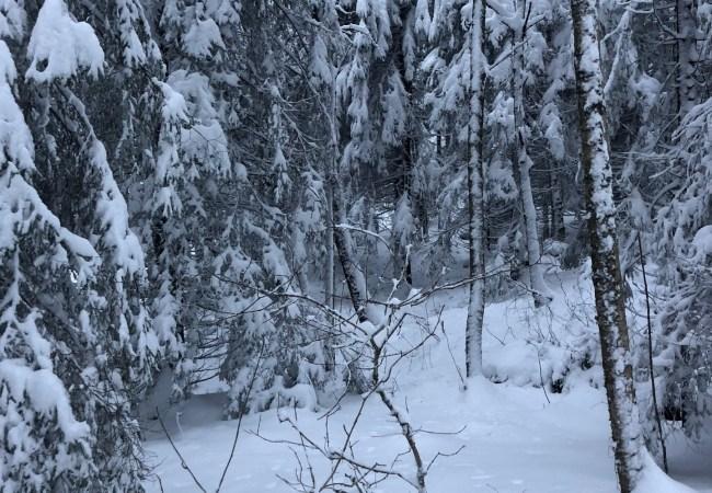 Ingefærs januarspesial 2018