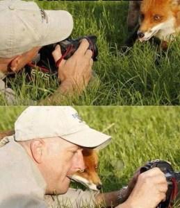 volpe-selfie