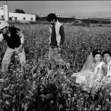 Taiwan. Taichung County. 1999. A couple seeks a rapeseed field in central Taiwan as a backdrop for their wedding photographs.