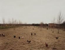 huhner krefeld, 1989