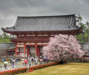 japonya_tapinak