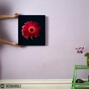 Red Gerbera canvas wall art