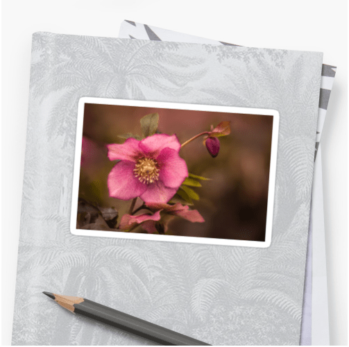 Christmas Rose Stickers - small