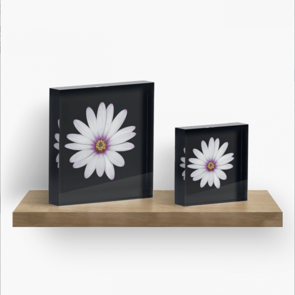 African Daisy acrylic block