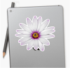 African Daisy medium sticker