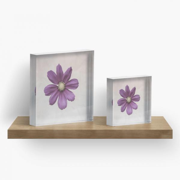 cosmos flower acrylic block
