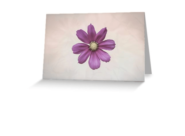 cosmos flower cards