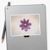 Cosmos flower stickers -medium