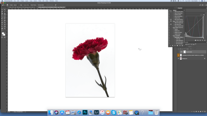 editing a carnation flower - finding the dust spots