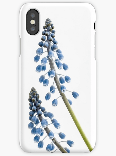 Grape Hyacinth Flower iphone cases