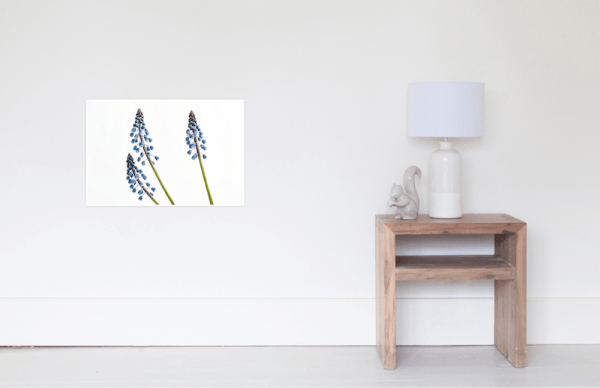 Grape Hyacinth Flower Poster