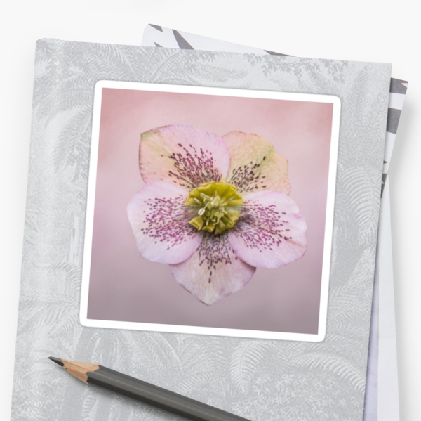 Hellebores Flower Stickers - small