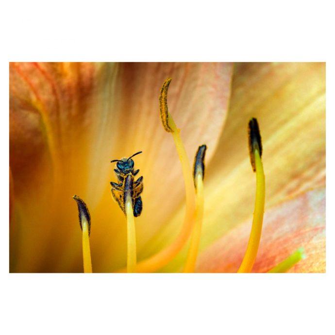 bee climbing a stamen