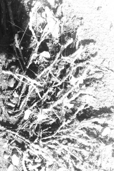 weeds-edit1