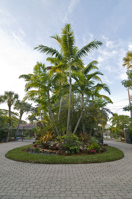 florida landscape with tropical