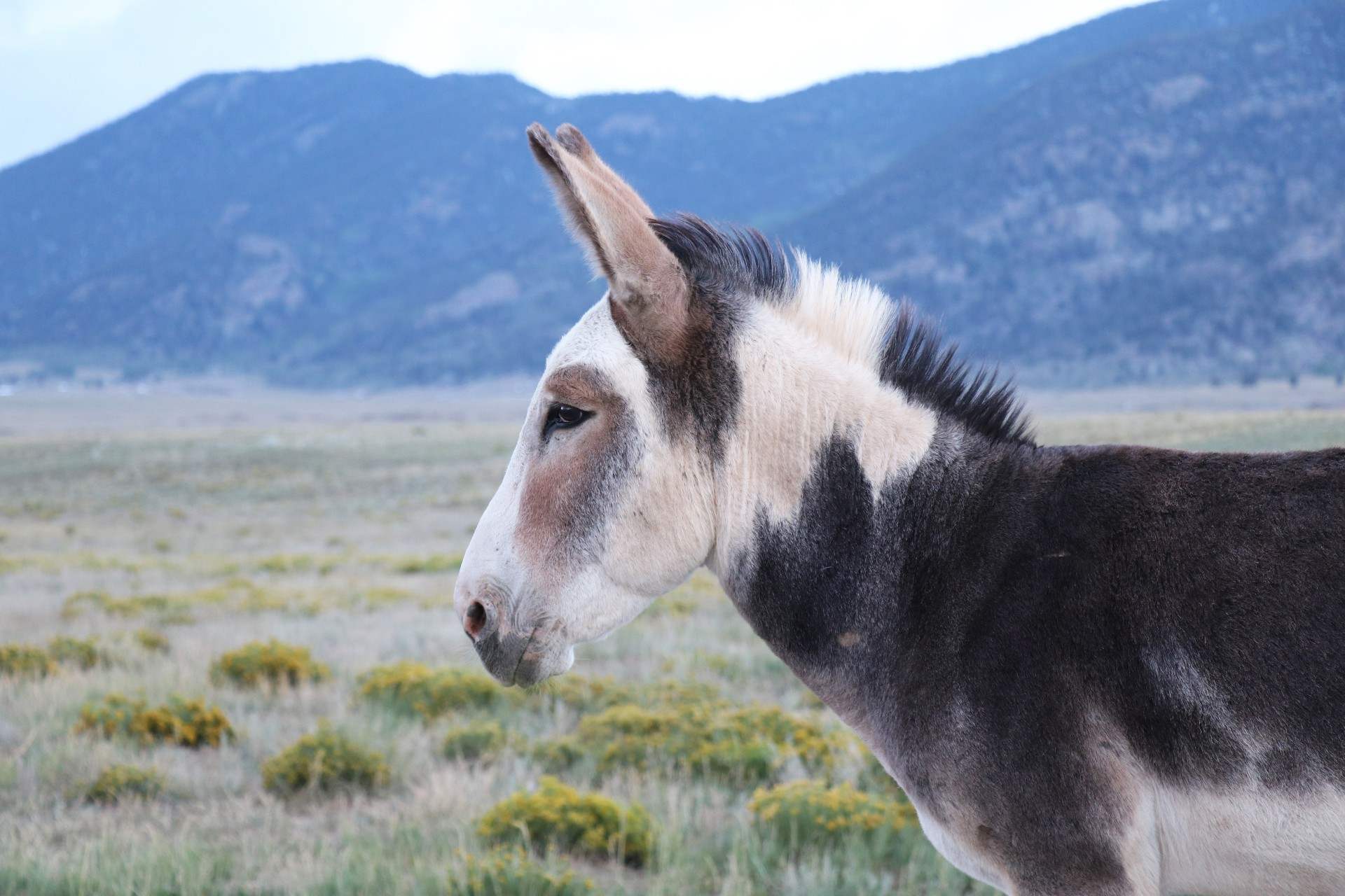 Wild Donkey Photographed By Sara Turbyfill At Eleven Mile State Park In Colorado.