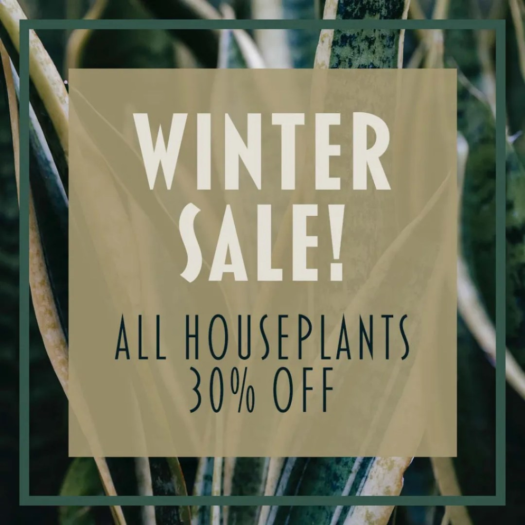 Winter Sale All Houseplants 30% Off Instagram Graphic By Sara Turbyfill.