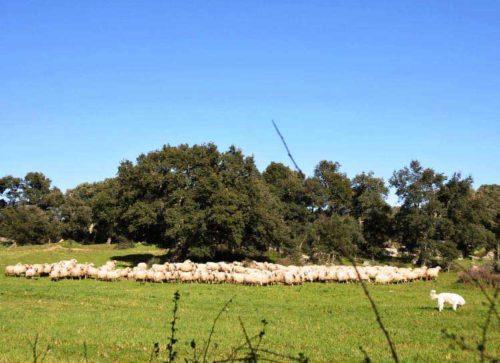 IL GIARDINIERE I nemici odierni dei pastori sono