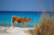 Solo in Sardegna....
