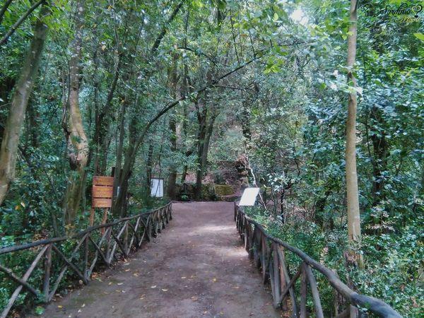 Viale interno al Parco