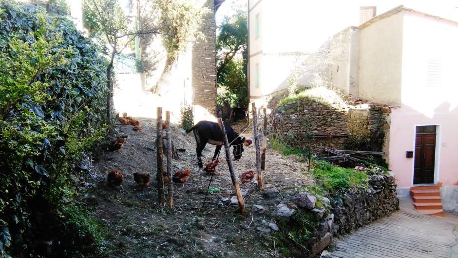 Asinelli e galline all'ingresso di Desulo