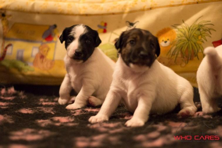 D-pups_3wks (8 of 37)