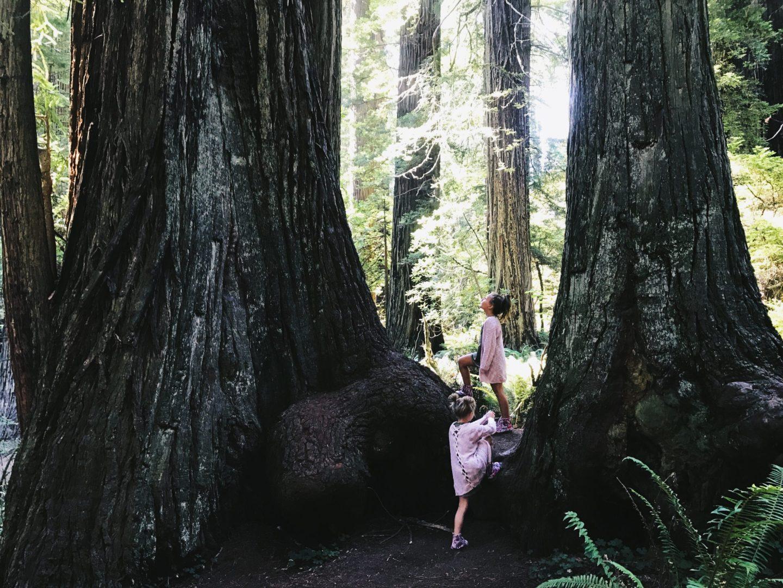 Roaming The Redwoods