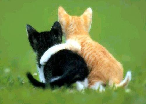 friends-cats-large.jpg