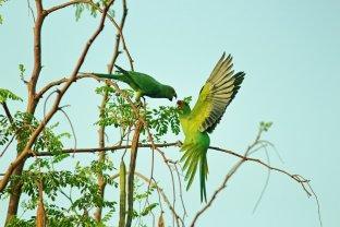 Birds, Animal