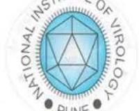 nnv logo