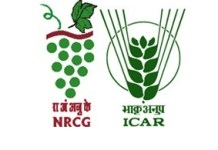 National Research Center for Grapes (NRCG) was established on 18th January 1997, Recognize by Indian Council of Agricultural Research (ICAR).