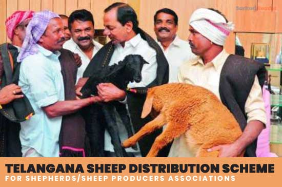 Telangana-sheep-distribution-scheme