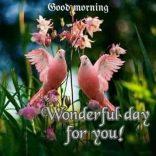 GOOD MORNING-66