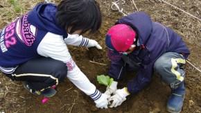 【ご案内】「どんグリーンの森づくり」~稚咲内砂丘林再生活動~
